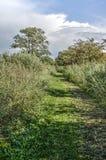 Тропа и тростники стоковое изображение rf