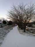 Тропа крышка снегом Взгляд на Kawaguchiko в токио Японии дальше стоковая фотография