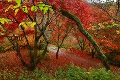 Тропа к падению и раю Стоковая Фотография