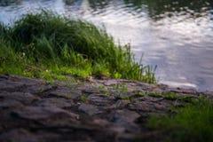 Тропа к реке Стоковое Изображение