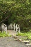 Тропа моста стоковое фото