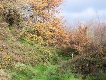 Тропа осени желтая и зеленая дерева через лес сельской местности Стоковое Фото
