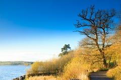 Тропа осени на реке Co.Cork, Ирландии. Стоковые Изображения