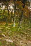 тропа осени Стоковая Фотография RF