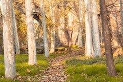 Тропа падения с деревьями и листьями на поле стоковые изображения rf
