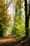 Тропа покрытая листьями в плотном лесе i Стоковые Фото