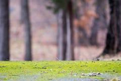 Тропа покрытая с ярким ым-зелен мхом Стоковое Изображение RF