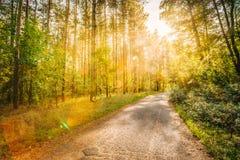 Тропа пути дороги пути дальше в лесе лета солнечном на заходе солнца или Солнце Стоковое Фото