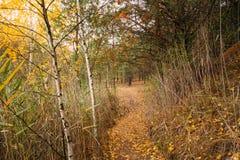 Тропа пути пути в лесе осени Стоковое фото RF