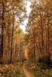 Тропа древесина весны Стоковое Изображение RF