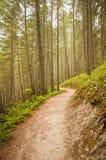 Тропа скалистых гор Стоковое Фото