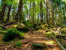 Тропа среди деревьев в ry Stolowe ³ GÃ в Польше стоковые фотографии rf