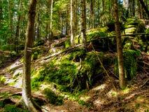 Тропа среди деревьев и утесов в ry Stolowe ³ GÃ в Польше стоковая фотография rf