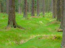 Тропа среди деревьев и утесов в ry Stolowe ³ GÃ в Польше стоковое изображение
