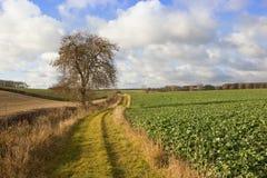 Тропа страны с деревом золы Стоковые Фото