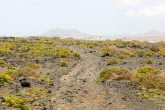 Тропа с вегетацией в вулканической земле Caleta de Famara, Лансароте, Испании Стоковое Изображение
