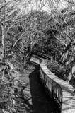 Тропа текстуры ветви Стоковое Изображение