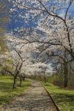 Тропа цветений Стоковое фото RF