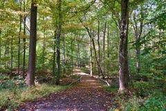 Тропа через древесины Стоковые Изображения RF