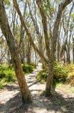 Тропа через деревья Стоковая Фотография RF