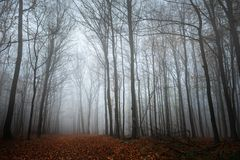 Тропа через лес осени Стоковая Фотография RF