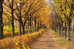 Тропа через парк осени Стоковое фото RF