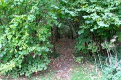 Тропа через древесины Стоковые Изображения
