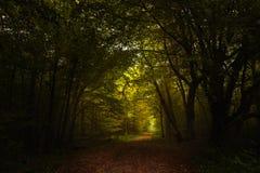 Тропа через темный лес осени к свету, сезонный l Стоковые Изображения