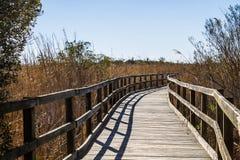 Тропа через тростники на задней охраняемой природной территории соотечественника залива стоковые фотографии rf