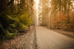 Тропа через туманный лес осени стоковые фото