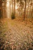 Тропа через туманный лес осени стоковая фотография