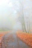 Тропа через туманный парк осени стоковые фотографии rf