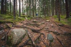 Тропа через overgrown в корнях дерева, с hiker в расстоянии Стоковые Фото