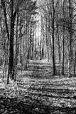 тропа Стоковая Фотография RF