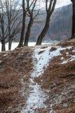 Тропа Snowy через лес Стоковые Изображения