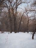 Тропа Snowy через лиственный лес Стоковое Изображение RF