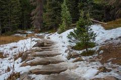 Тропа Snowy стоковые фото