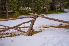 Тропа Snowy стоковая фотография