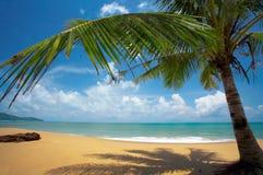 тропик пляжа стоковая фотография rf