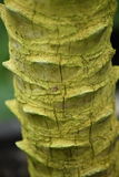 Тропик paml древесной зелени Стоковые Фотографии RF