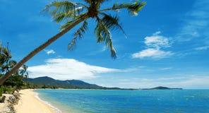 Тропическая ладонь пляжа Стоковая Фотография RF