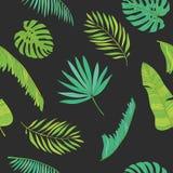 Тропическая ладонь, monstera, chamaedorea выходит безшовная предпосылка картины Стоковая Фотография