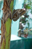 Тропические бабочки Стоковые Фото