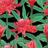 Тропическая безшовная картина с имбирем факела цветет и листья на черной предпосылке Стоковые Фото