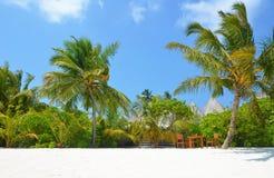 Тропическая вегетация на пляже стоковое фото