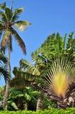 тропическая вегетация Стоковое фото RF