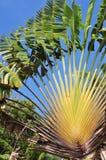 тропическая вегетация Стоковое Фото
