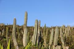 Тропическая вегетация restinga в Рио-де-Жанейро Стоковое Изображение RF