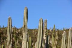 Тропическая вегетация restinga в Рио-де-Жанейро Стоковая Фотография