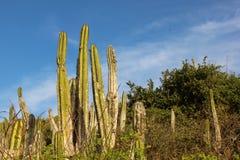 Тропическая вегетация restinga в Рио-де-Жанейро Стоковая Фотография RF